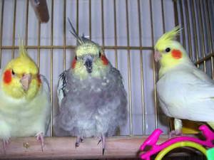 Fotos de mascotas aves exóticas