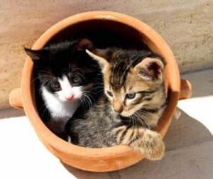 dos gatos mascotas