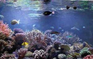 peces acuario mascotas